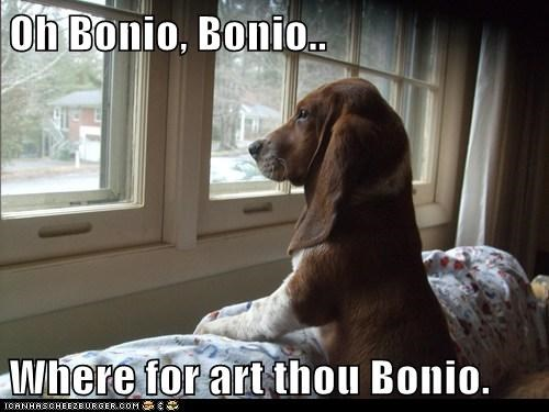 Oh Bonio, Bonio..  Where for art thou Bonio.