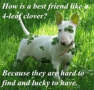 How is a best friend like a 4-leaf clover?   Because they are hard to find and lucky to have.