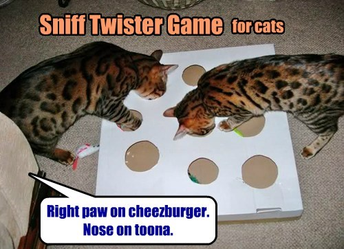 Hours of fun for your kitties!