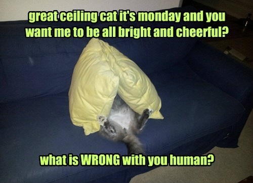 great ceiling cat it's monday and you  want me to be all bright and cheerful?        what is WRONG with you human?