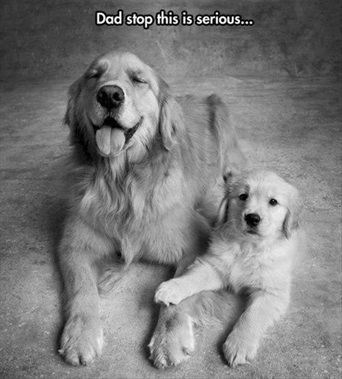 dogs,pictures,puppies,dad