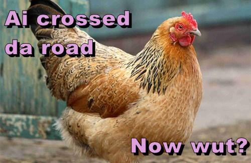 chickens,funny,riddles