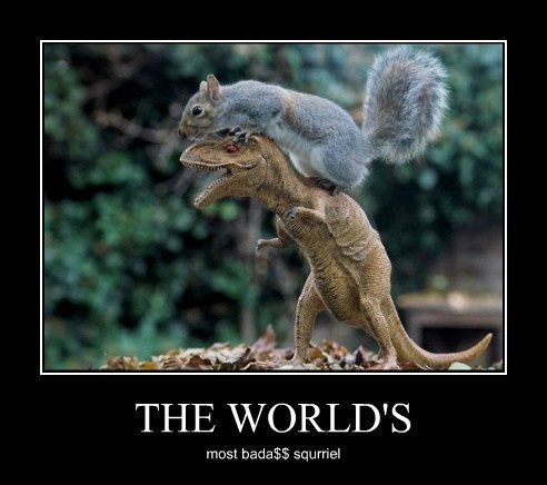 Now That's an Impressive Squirrel
