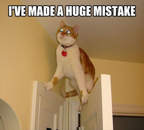 stuck,Cats,mistake,funny