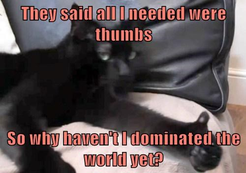 They said all I needed were thumbs  So why haven't I dominated the world yet?