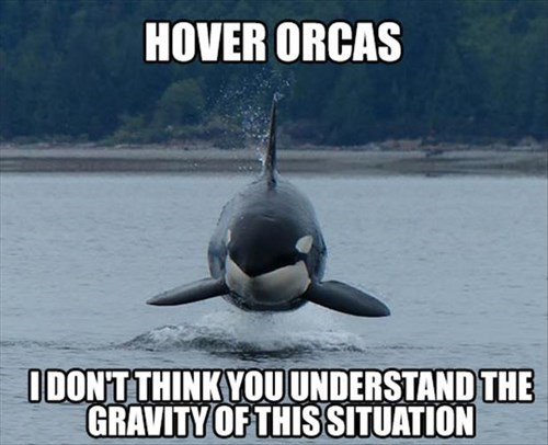 hover,puns,Gravity,orca