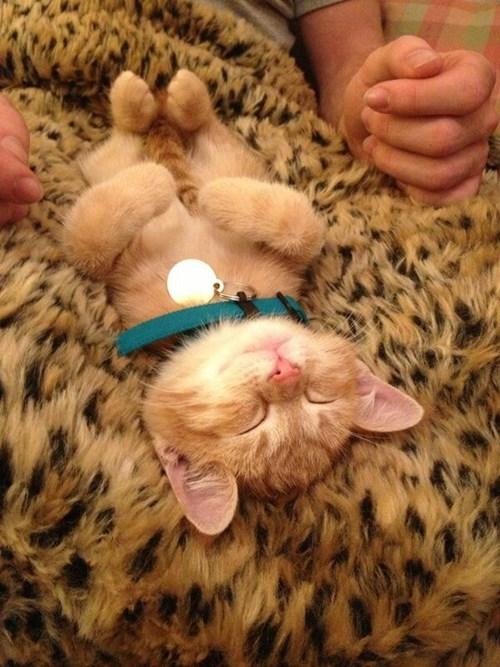 kitten,cute,fuzzy,sleeping