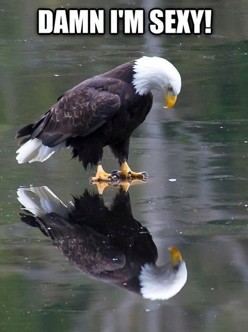 The Eagle, Like America, Has a High Opinion of Itself