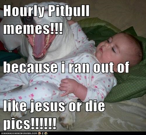 Hourly Pitbull memes!!! because i ran out of  like jesus or die pics!!!!!!