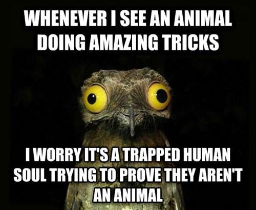 pets,peculiar potoo,animals