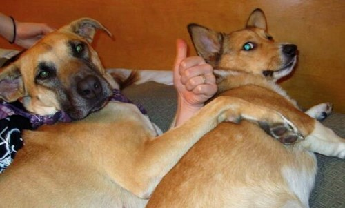 dogs,thumbs up,funny,weird