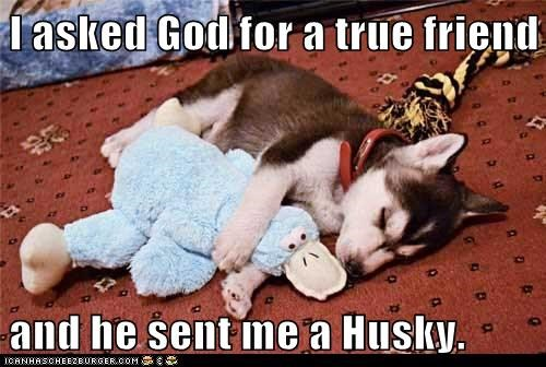 I asked God for a true friend   and he sent me a Husky.