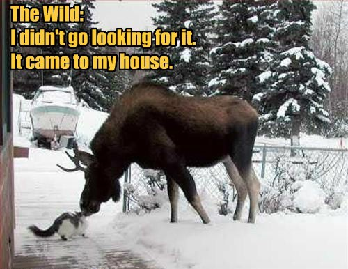 The Wild:  I didn't go looking for it.  It came to my house.