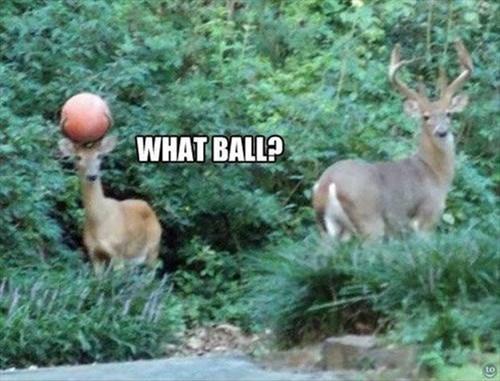 balls,clueless,deer