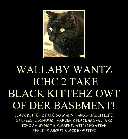 WALLABY WANTZ  ICHC 2 TAKE  BLACK KITTEHZ OWT OF DER BASEMENT!
