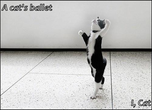A cat's ballet  I, Cat