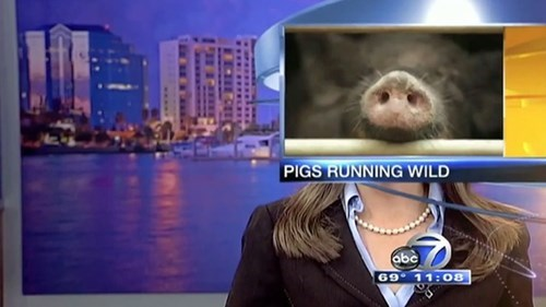 Local News is Best News