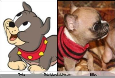 Tyke Totally Looks Like Bijou
