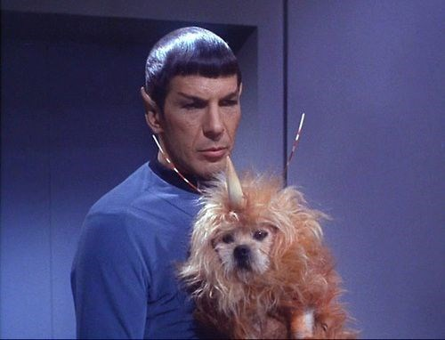 Remember When Star Trek Made an Exotic Alien by Adding a Horn to a Dog?