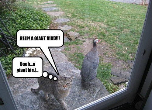 HELP! A GIANT BIRD!!!