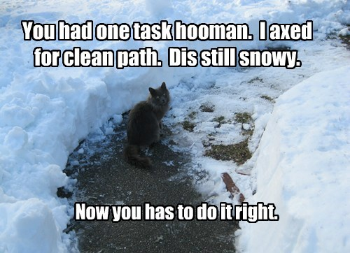 You had one task hooman.  I axed for clean path.  Dis still snowy.