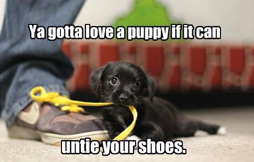 shoes,shoelaces,puppies,cute