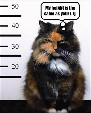 Kitteh does not like being measured.