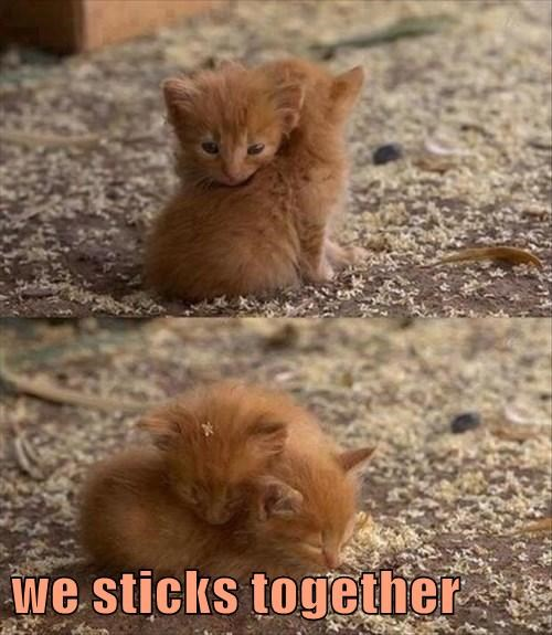 we sticks together
