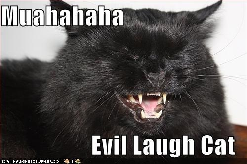Muahahaha  Evil Laugh Cat