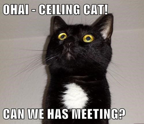 OHAI - CEILING CAT!  CAN WE HAS MEETING?