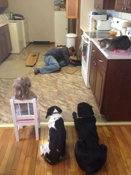 dogs,pets,kids,home repair,parenting,Cats