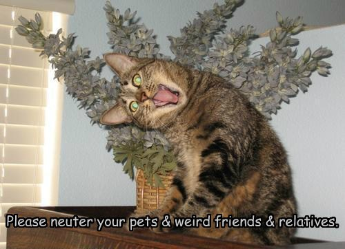 Please neuter your pets & weird friends & relatives.