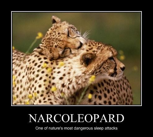 NARCOLEOPARD