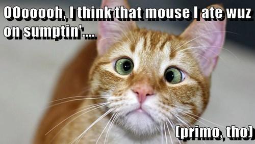 OOooooh, I think that mouse I ate wuz on sumptin'....  (primo, tho)