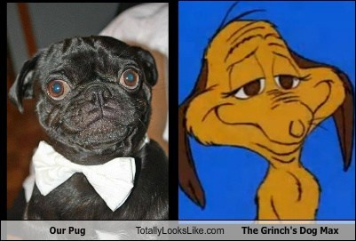 Our Pug Totally Looks Like The Grinch's Dog Max
