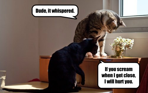 Dude, it whispered.