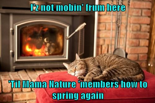 I'z not mobin' frum here  'Til Mama Nature 'members how to spring again