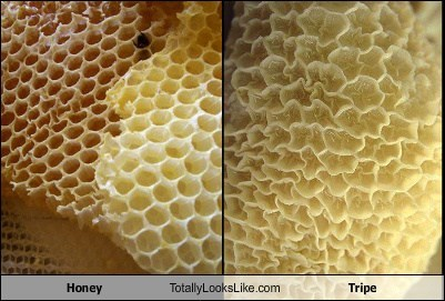 Honey Totally Looks Like Tripe