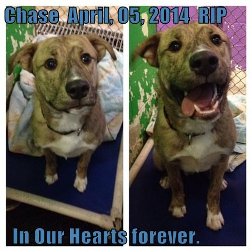 Chase  April, 05, 2014  RIP    In Our Hearts forever.