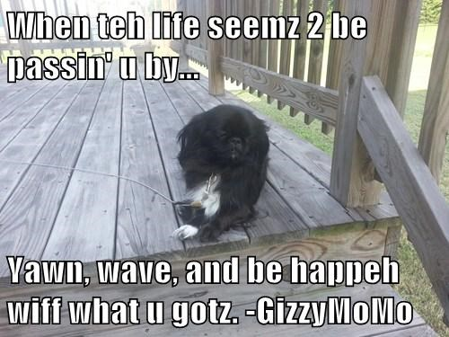 When teh life seemz 2 be passin' u by...  Yawn, wave, and be happeh wiff what u gotz. -GizzyMoMo