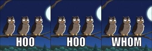 grammar,family guy,owls