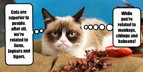 Grumpy Cat makes a good point.