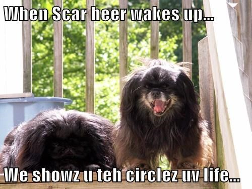 When Scar heer wakes up...  We showz u teh circlez uv life...