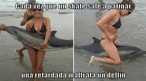 Cada vez que un skate sale a patinar  una retardada maltrata un delfin