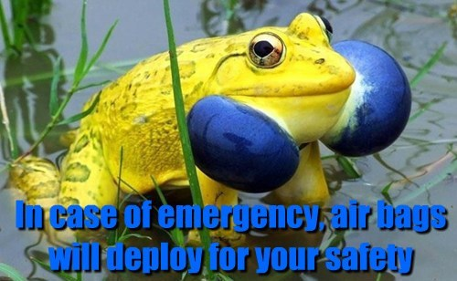 emergency,airbags,funny,frogs