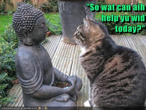 buddha,statue,Cats