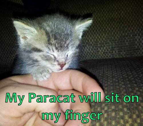 My Paracat will sit on my finger