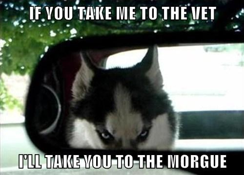 IF YOU TAKE ME TO THE VET  I'LL TAKE YOU TO THE MORGUE