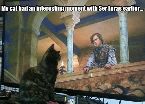 The Game of Cats