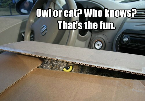 Owl or cat? Who knows? That's the fun.